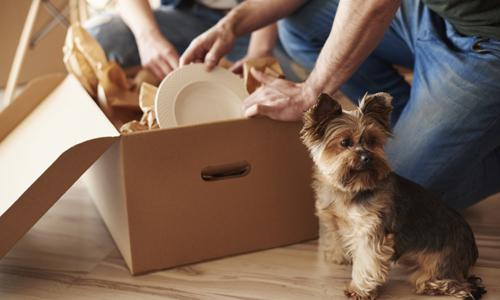 due persone aprono un pacco di cartone appoggiato vicino a un cane