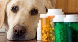 farmacie online, farmacie veterinarie, fazzoletti monouso