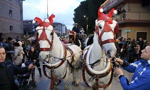 Vista ravvicinata di due cavalli bianchi sulla strada
