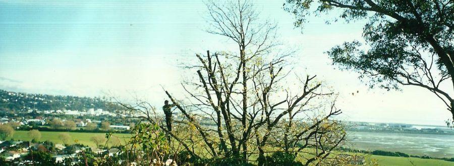 A Nelson man providing tree maintenance
