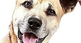 alberghi per cani, pensione per animali in box singoli, bagni antiparassitari