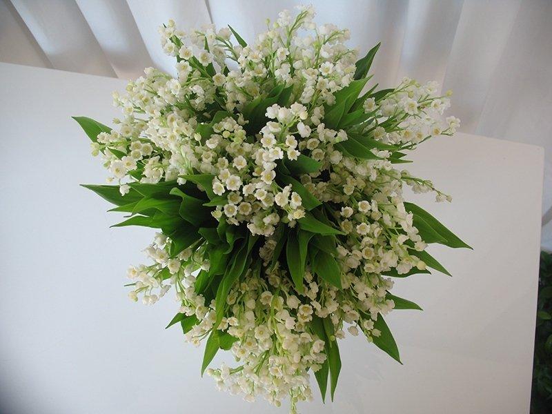 bouquet_fresie