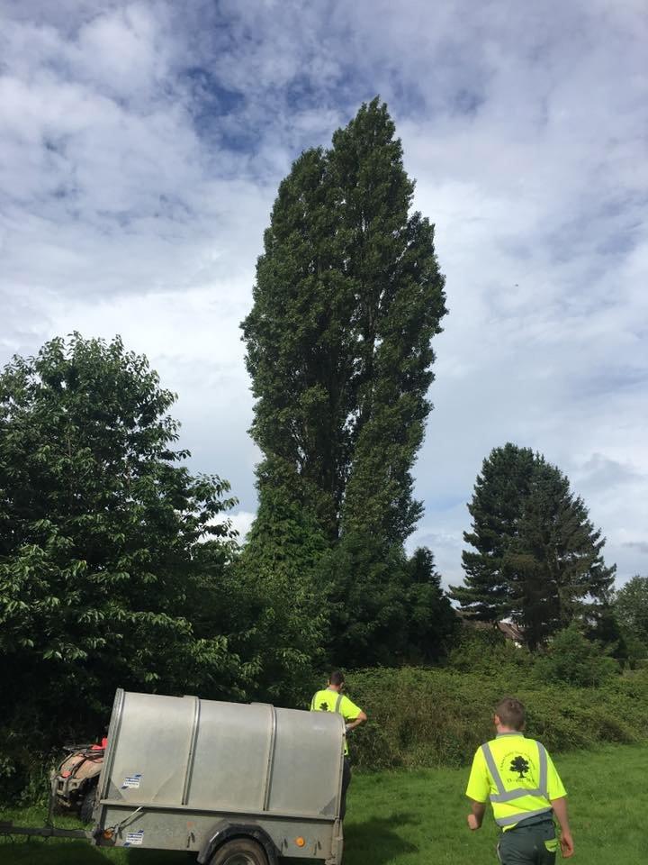 a tree surgeons van