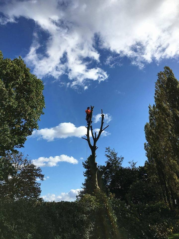 tree surgeon on the job