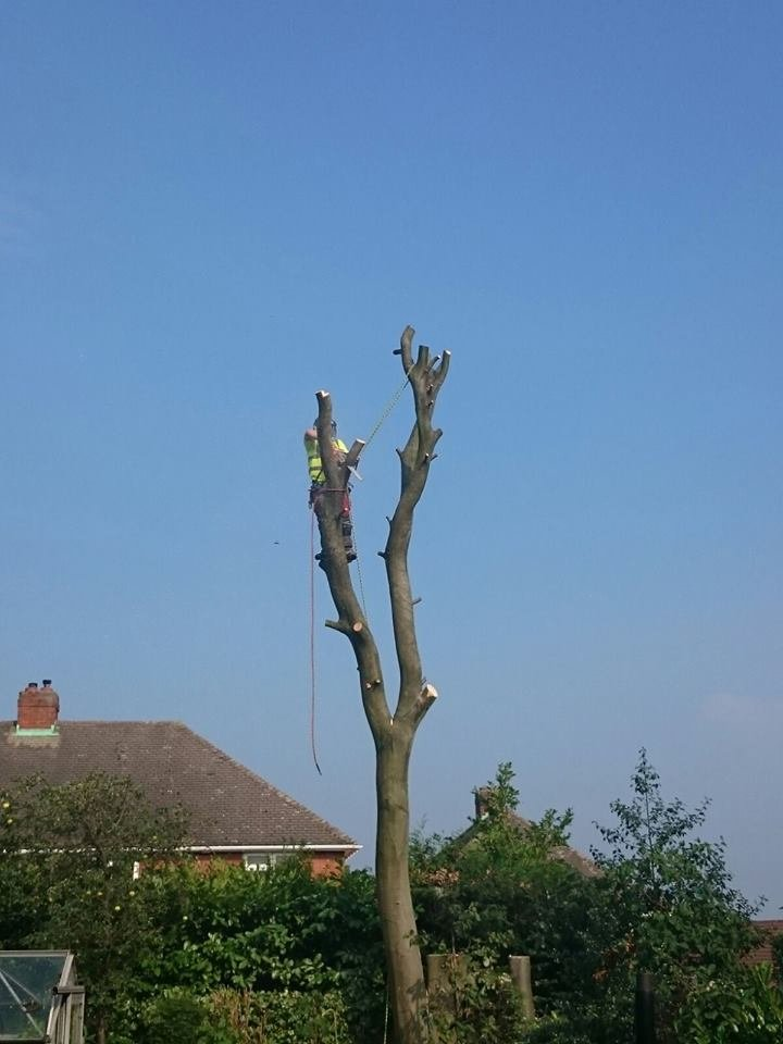 a tree with branches removed