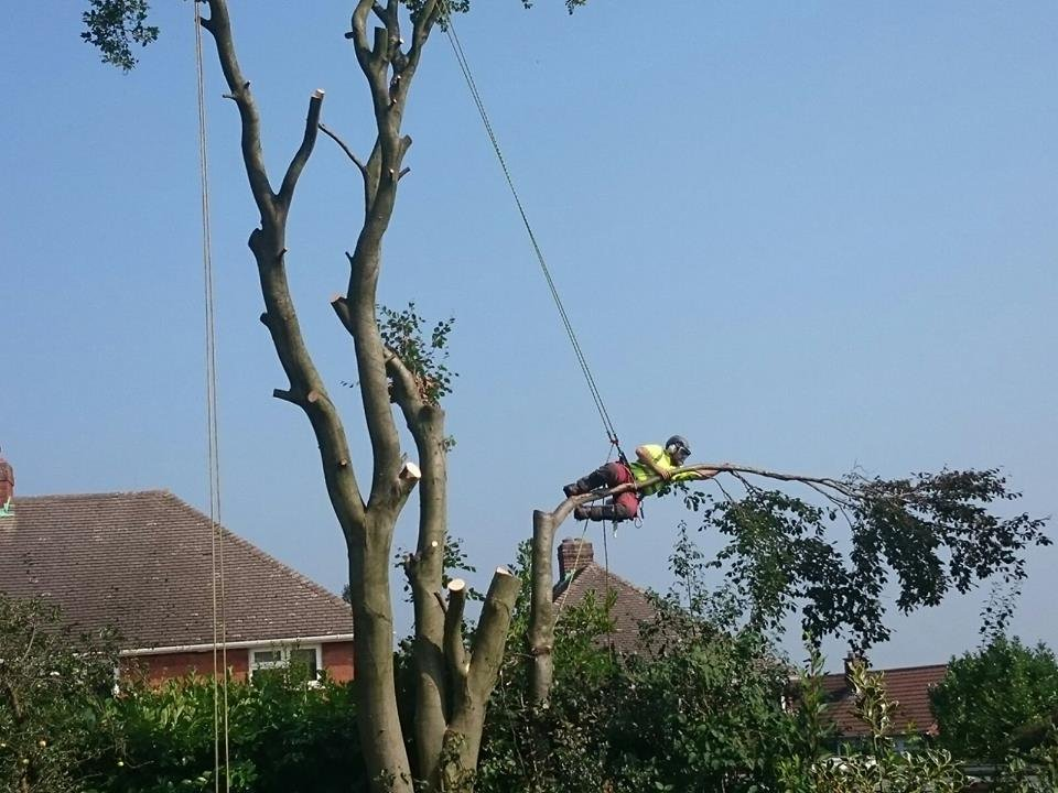 branches being cut