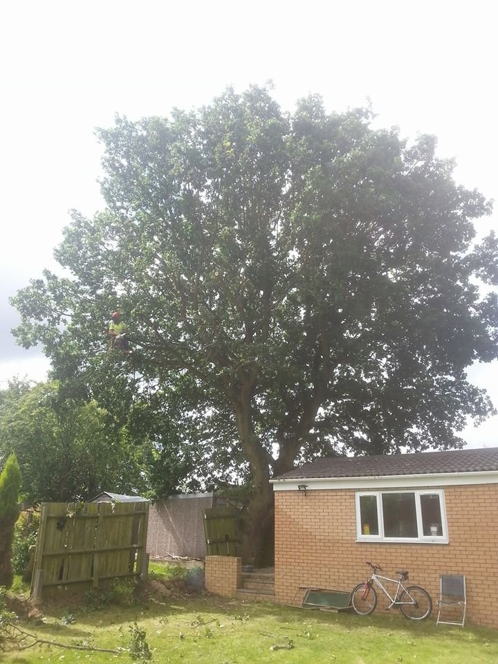 a fully grown tree