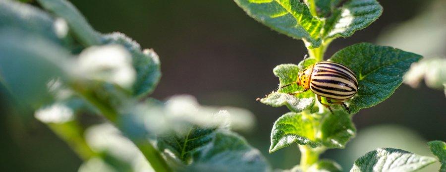 Lawn Pest Control Wilmington, NC