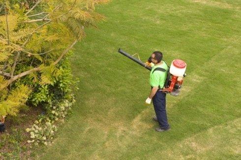 Intervento di disinfestazione in un giardino