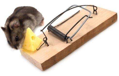 Eliminazione topi e roditori