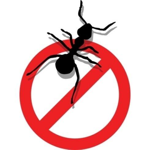 Prodotti mirati contro le formiche