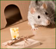 eliminazione animali infestanti