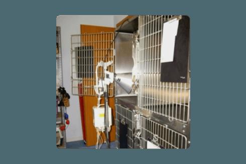 Ogni gabbia viene costantemente riscaldata con una lampada apposita.