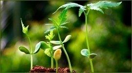 servizi cura piante