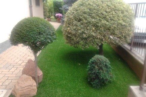 Servizio di piantumazione e potatura di alberi a basso e ad alto fusto.