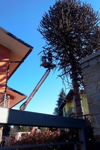 Un team di specialisti per la potatura di alberi ad alto fusto.