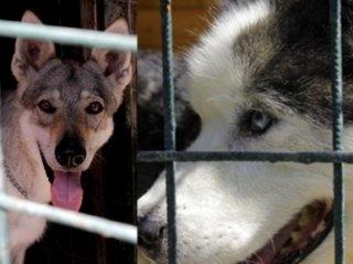 allevamento cani razza