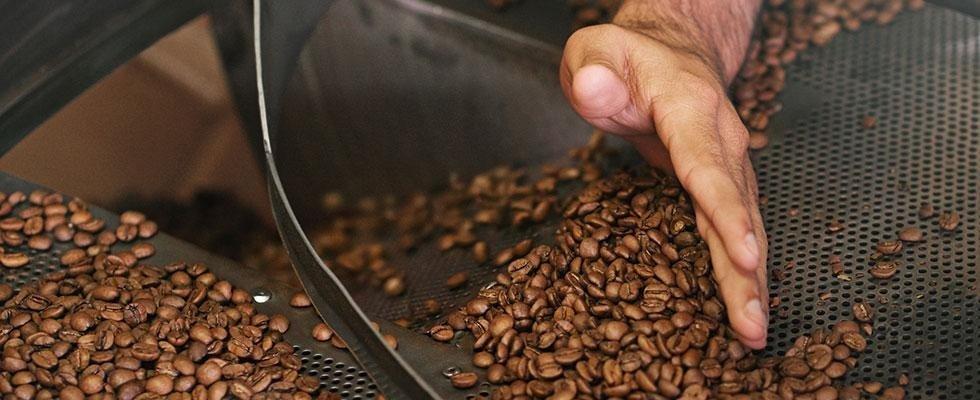 torrefazione chicchi di caffè Novara