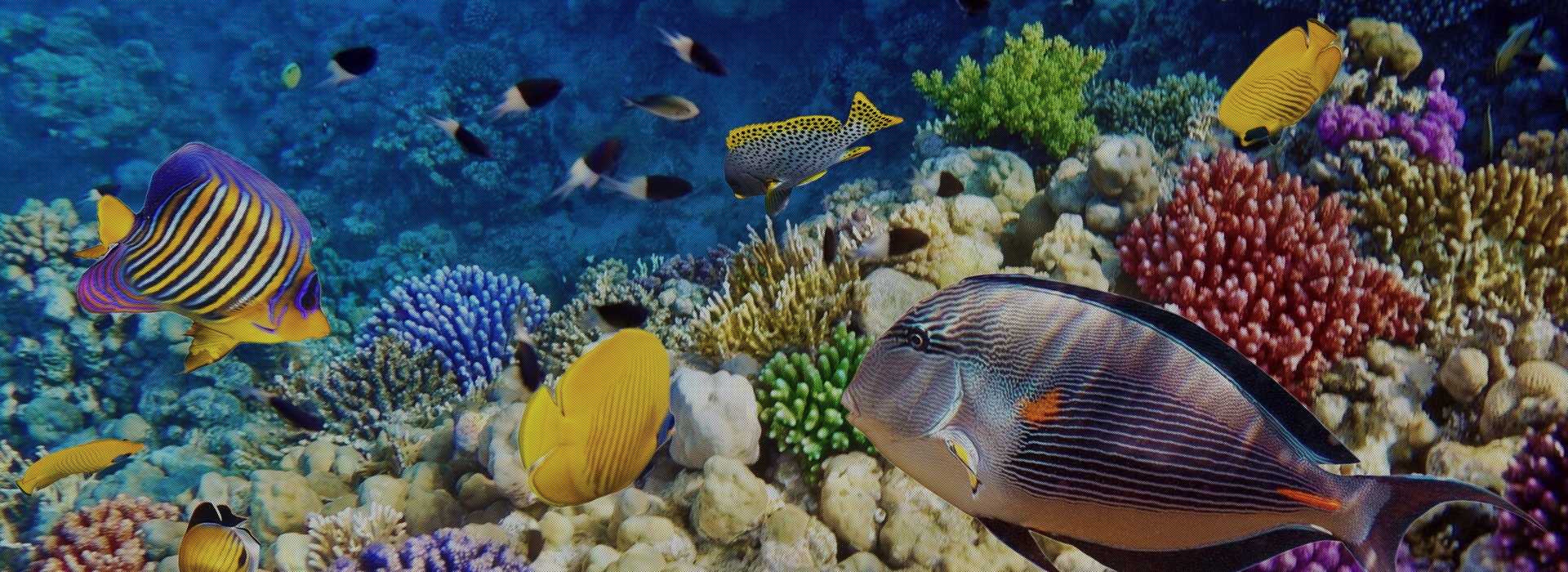 your aquarium specialists are you looking for aquarium specialists ...