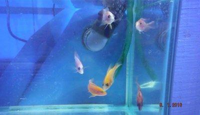 custom designed aquariums
