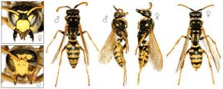 disinfestazione da vespe