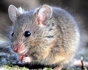 rat proofing