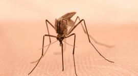 interventi contro zanzara tigre
