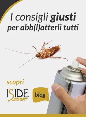 un'immagine con scritto i consigli giusti per abbatterli tutti con uno scarafaggio e una mano con una bomboletta spray