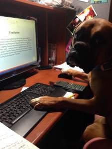 Boxer dog at computer