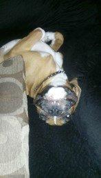 Boxer dog upside down