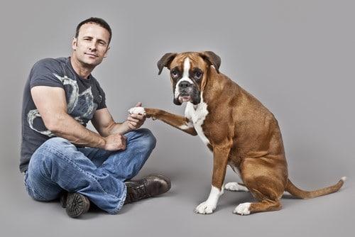Boxer-dog-owner-information