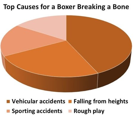 chart-Reasons-For-Boxer-Dog-Breaking-Bone
