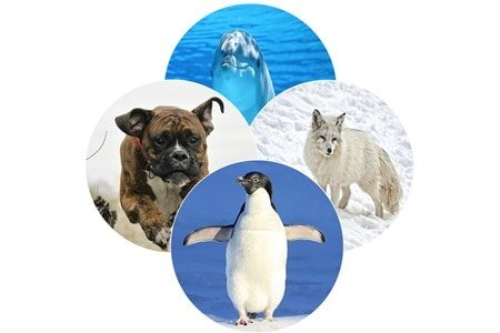 dog-penguin-dolphin-arctic-fox-comparison