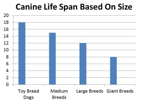 Dog Breed Longest Life Expectancy