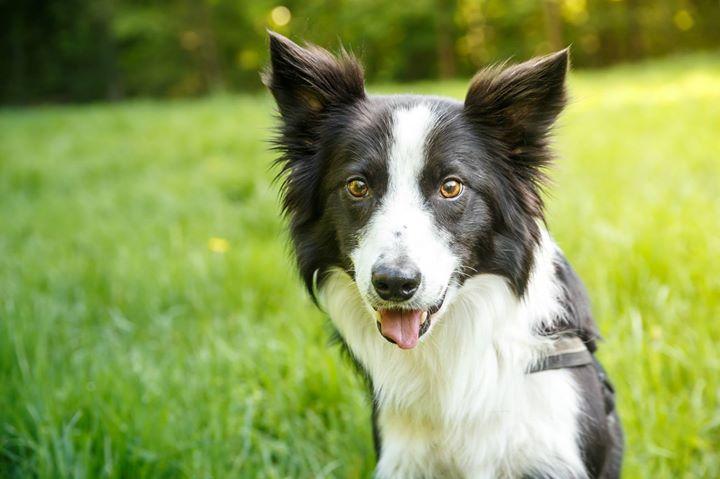 Hunde-Fotografie, Hundefotograf, Tierfotograf, Outdoor, Hannover