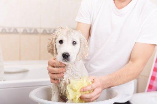 cane che viene lavato in bacinella
