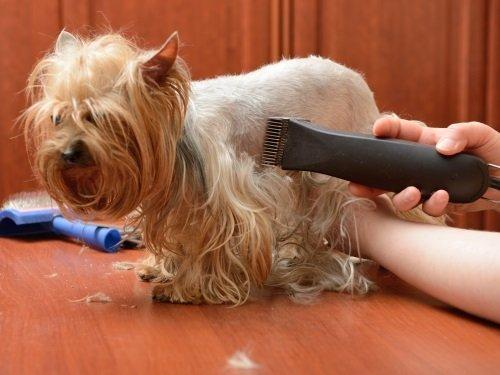 taglio del pelo al cane