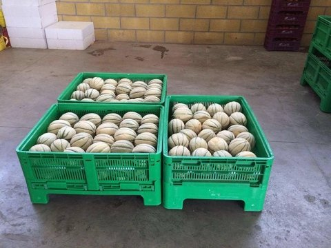 casse con meloni retati
