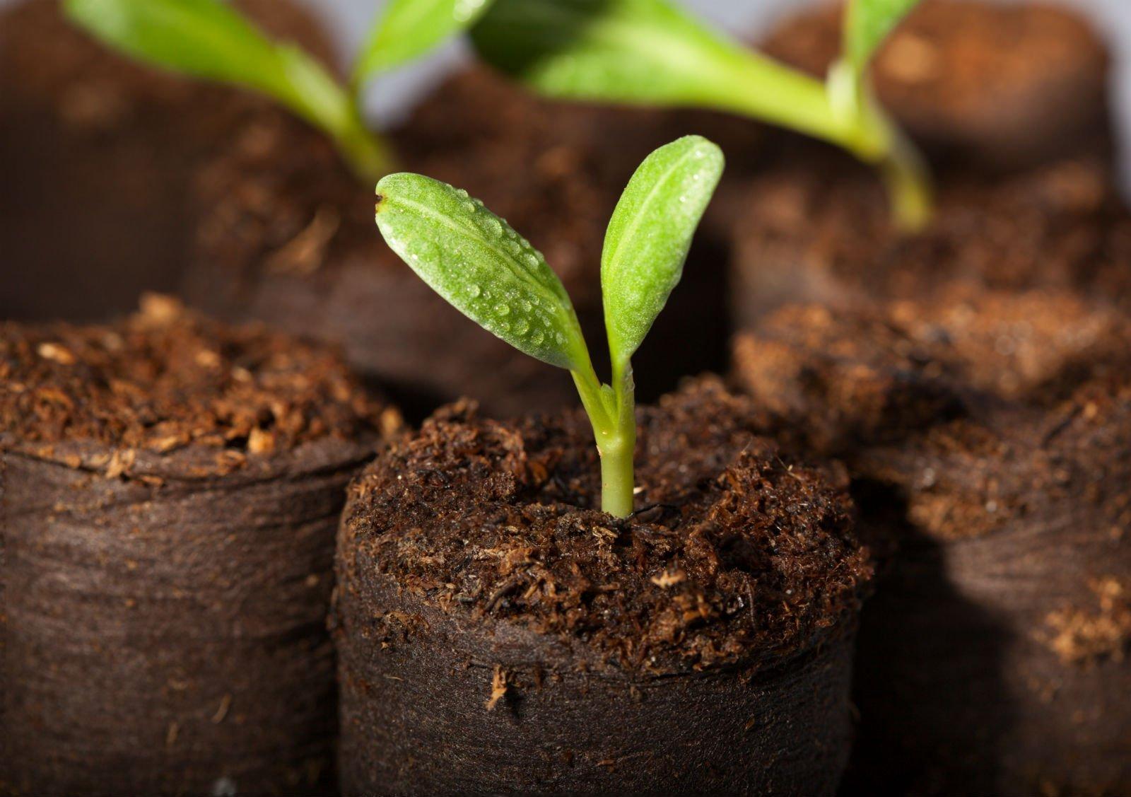 vista di piante in serra