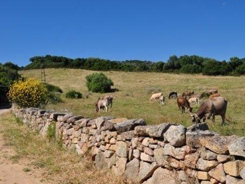 animali da allevamento nel campo adiacente all'agriturismo