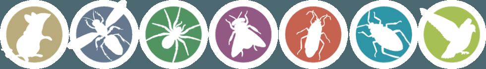 insetti nocivi