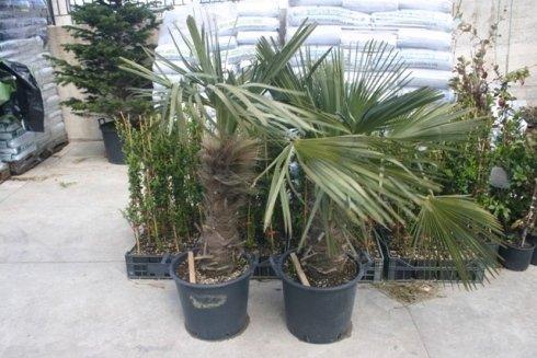 piante - punto Verde di Giracello