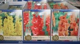 Sementi fiori, bulbi,