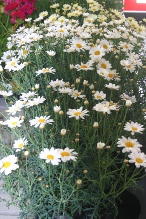 Piante ornamentali, piante, fiori, punto verde,