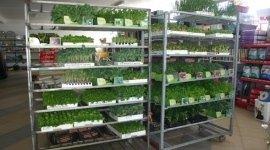 piante aromatiche, piante ornamentali, piante da frutto,
