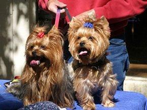 Dog grooming parlour - Scissett, Huddersfield - Hair 'n' Houndz - Dog Grooming