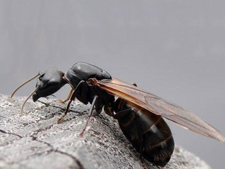 formiche disinfestazione naturale