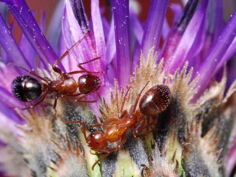 Igienizzazioni dalle formiche