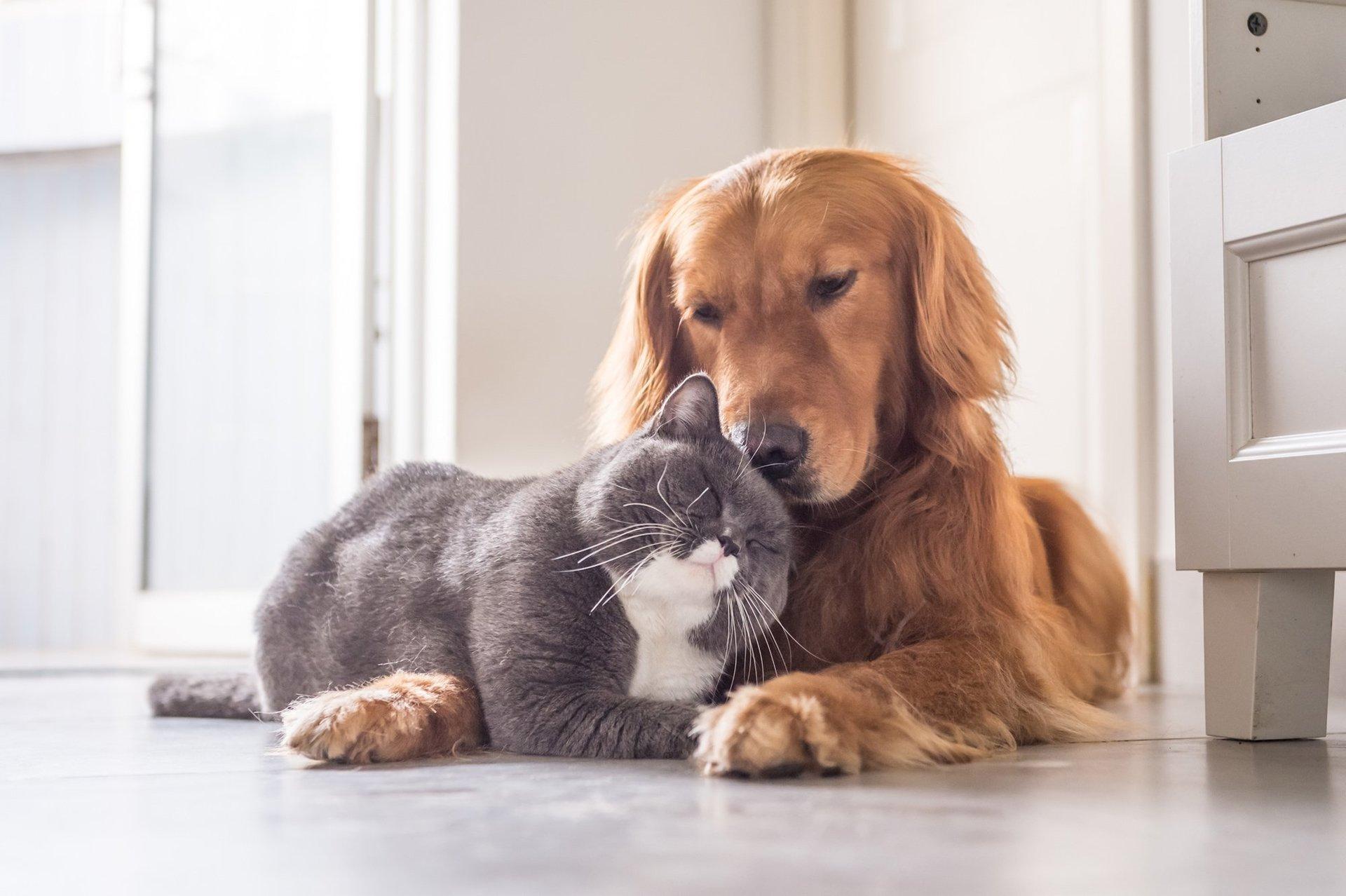 un cane e un gatto in buona salute