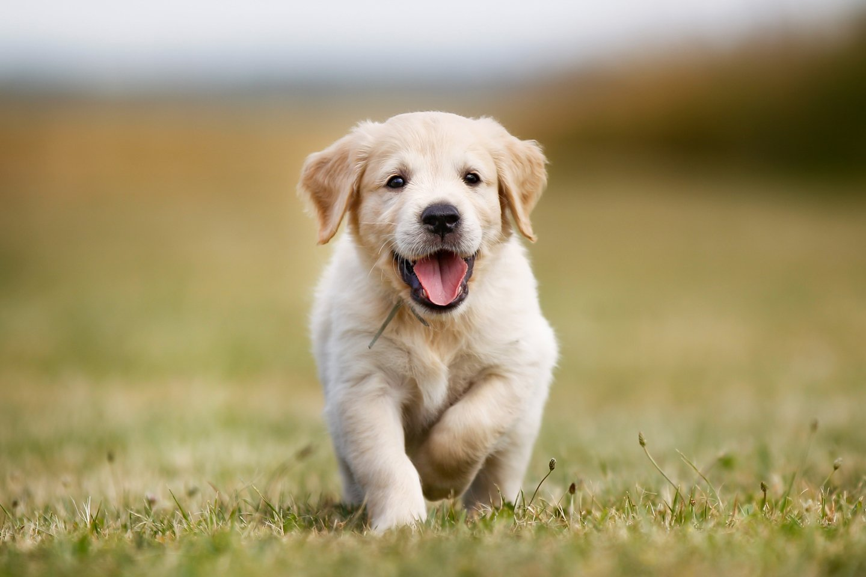 cucciolo di cane in buona salute